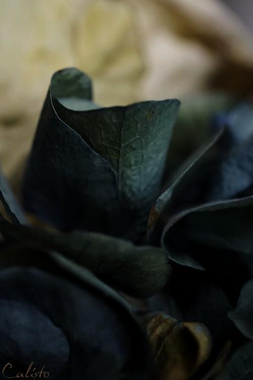 dark, colours, blue, flower, autumn
