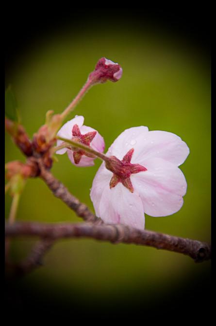 Spring in Ise Japan