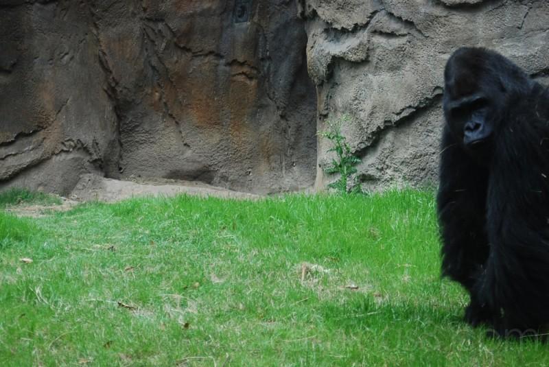 Dallas Zoo: The Stare