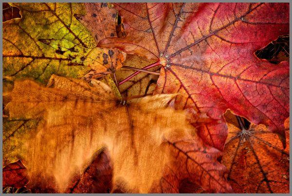 L'automne s'envole...