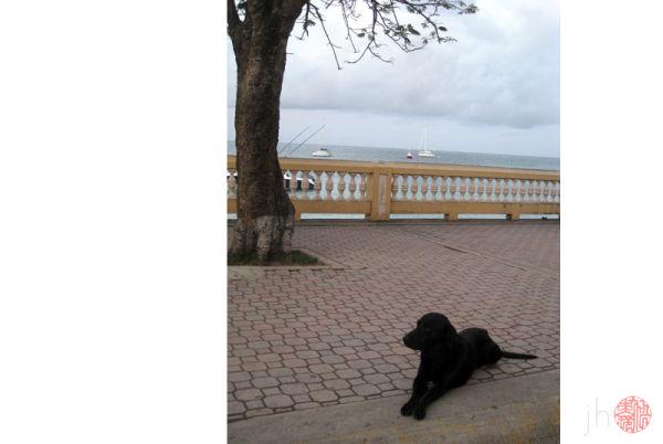 the dog at dawn