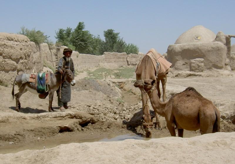 Turkmen villager, NW Afghanistan