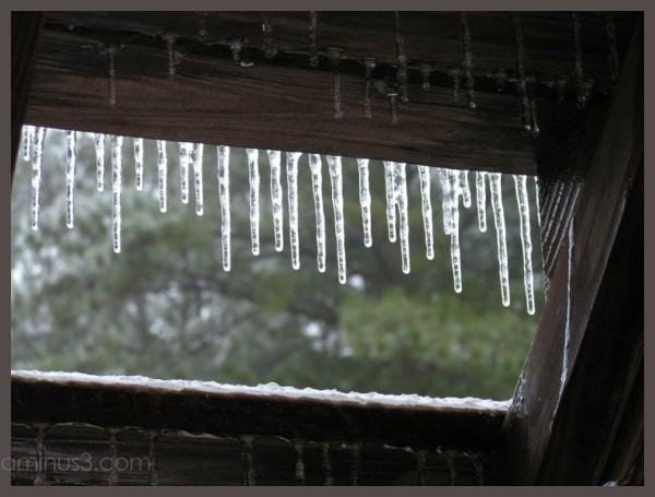Icesicles