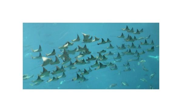 rays aquarium