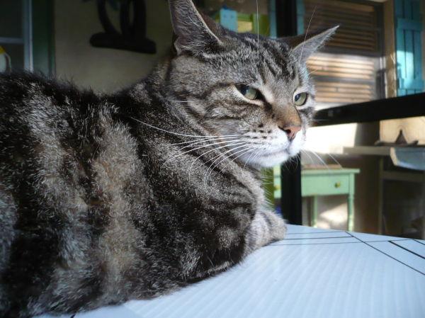 Myrtle our cat