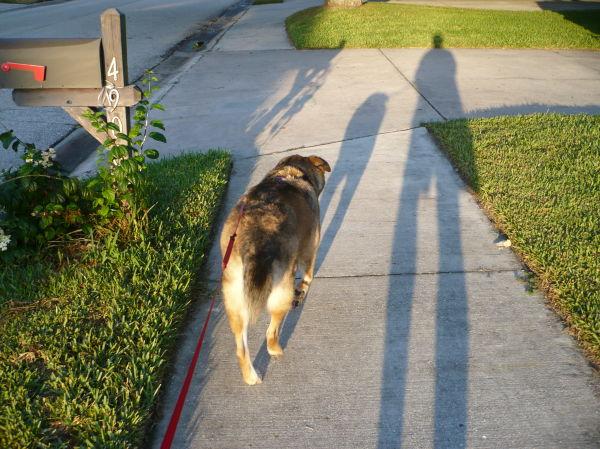 Bella me shadows