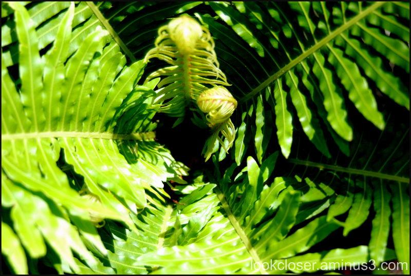 fern home green