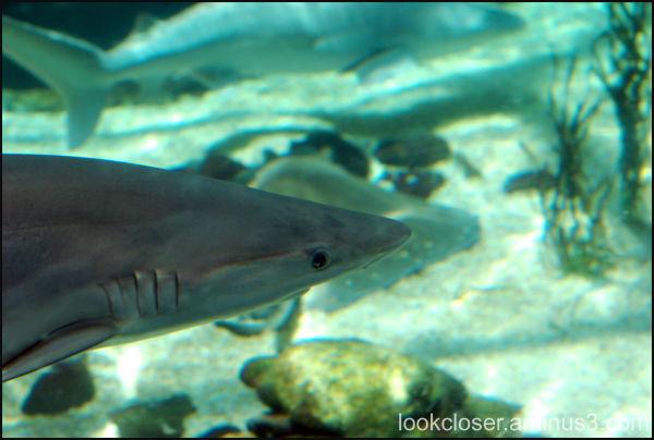 Mote Marine shark aquarium