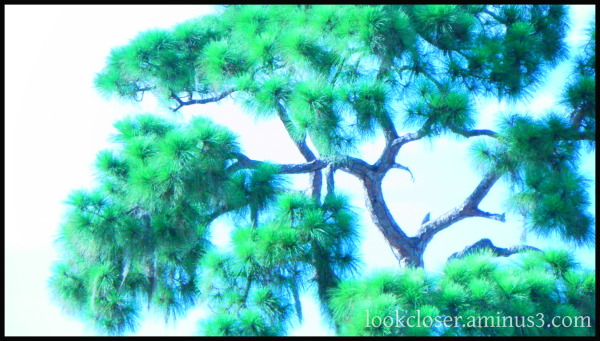 Bright colors pine tree