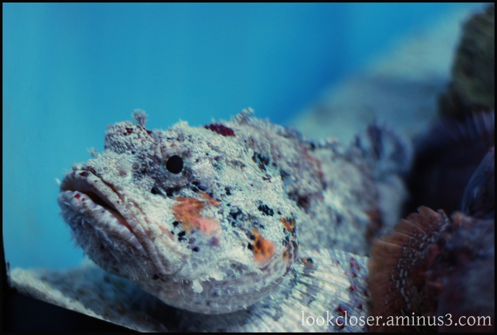 reef fish hdr oldie