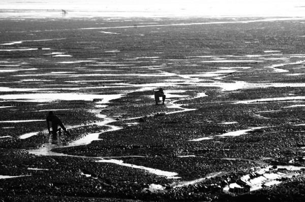 Fishermen crawling through the flats