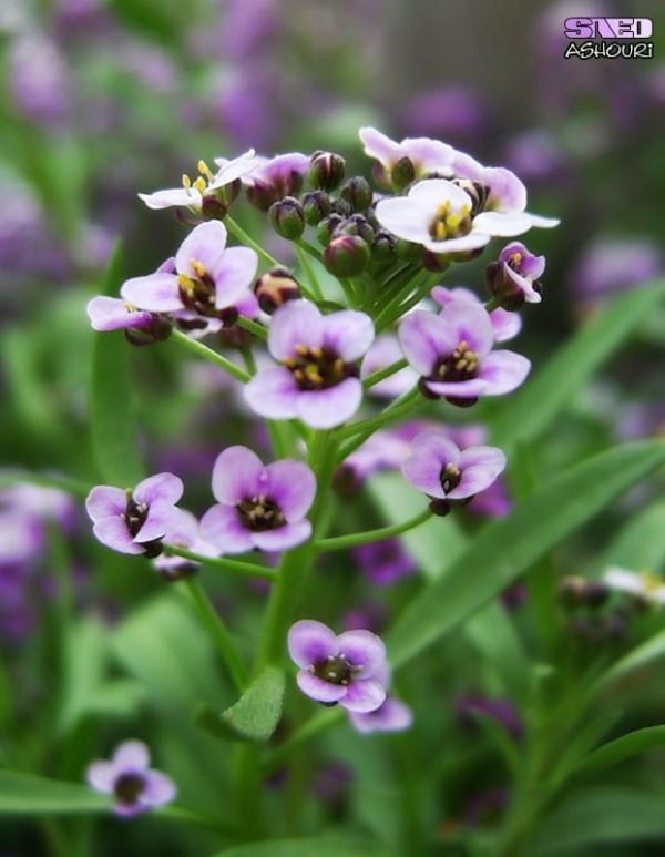 Flower Green Purple Garden