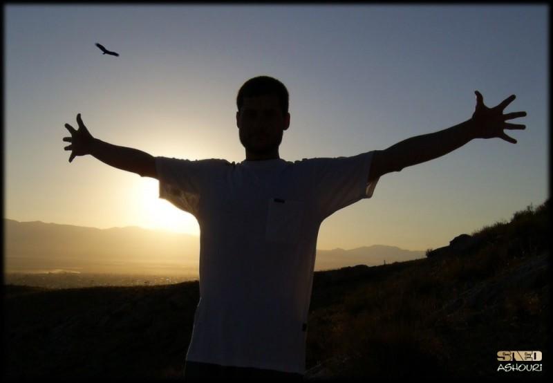 eagle fly sunrise sunset mountain sun