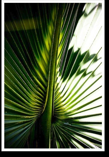 Pattern of a palm leaf