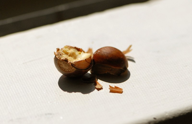 nature nuts