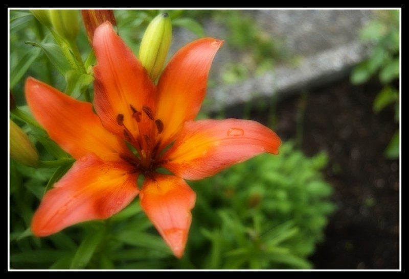 It's a flower, I used orton effect