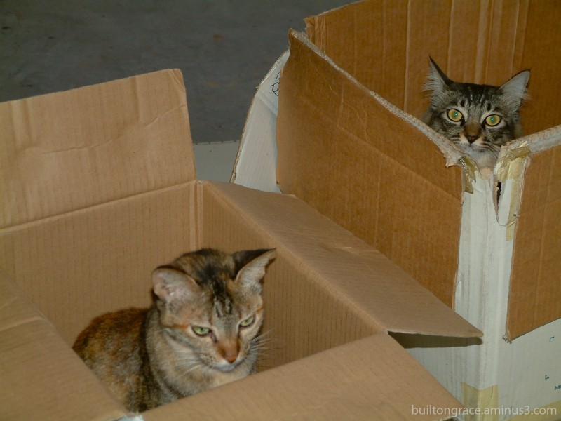 How to Fed-Ex a cat