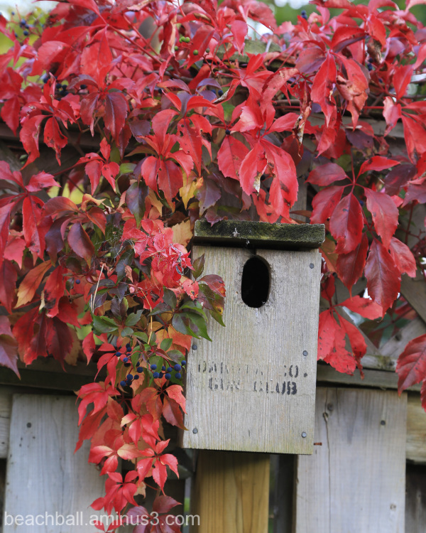 Birdhouse in Red