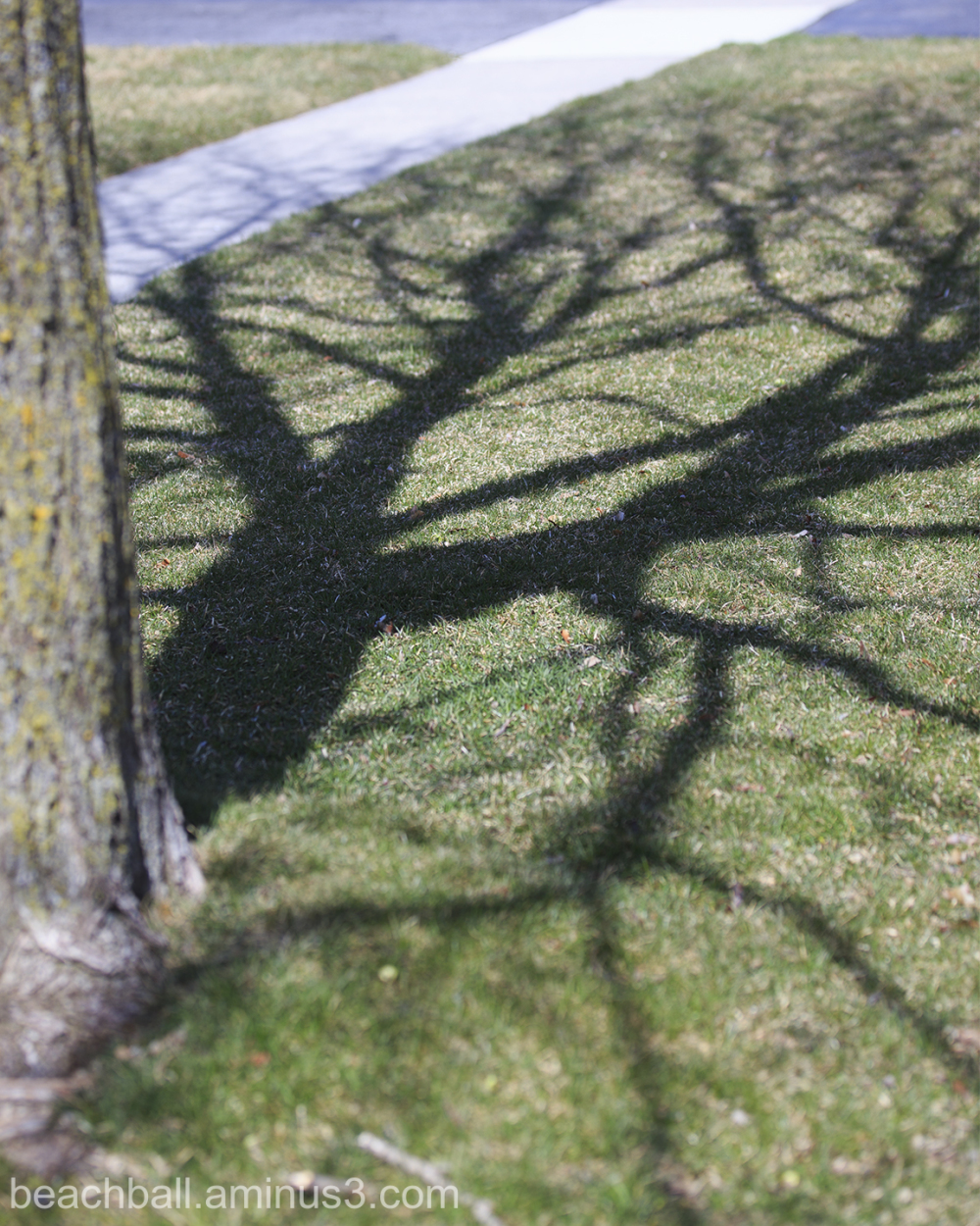 More Shadows