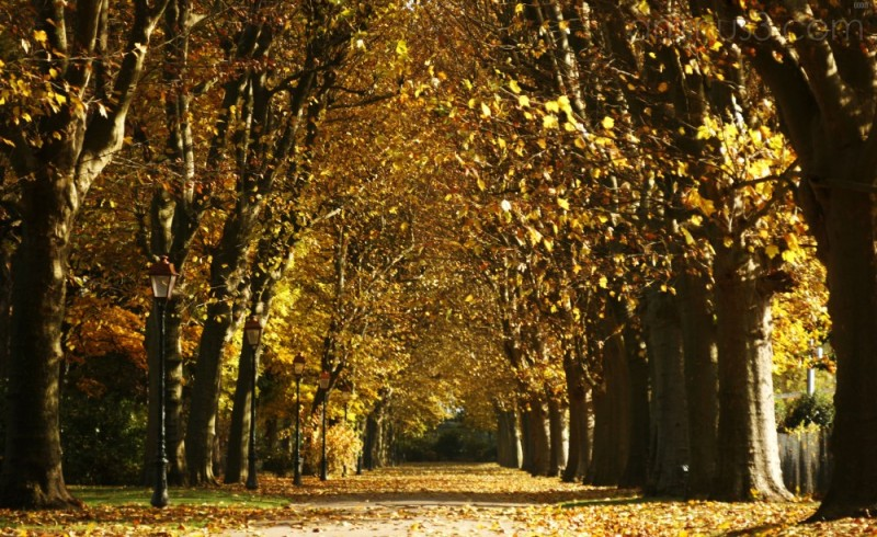 Auxerre's autumn