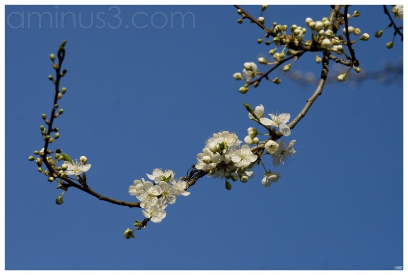 Spring series (11)