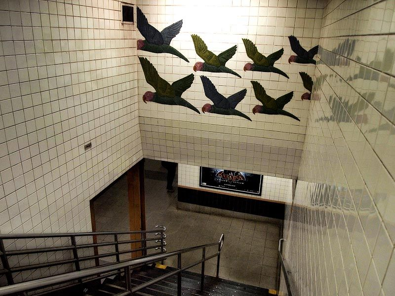 Birds at a subway station