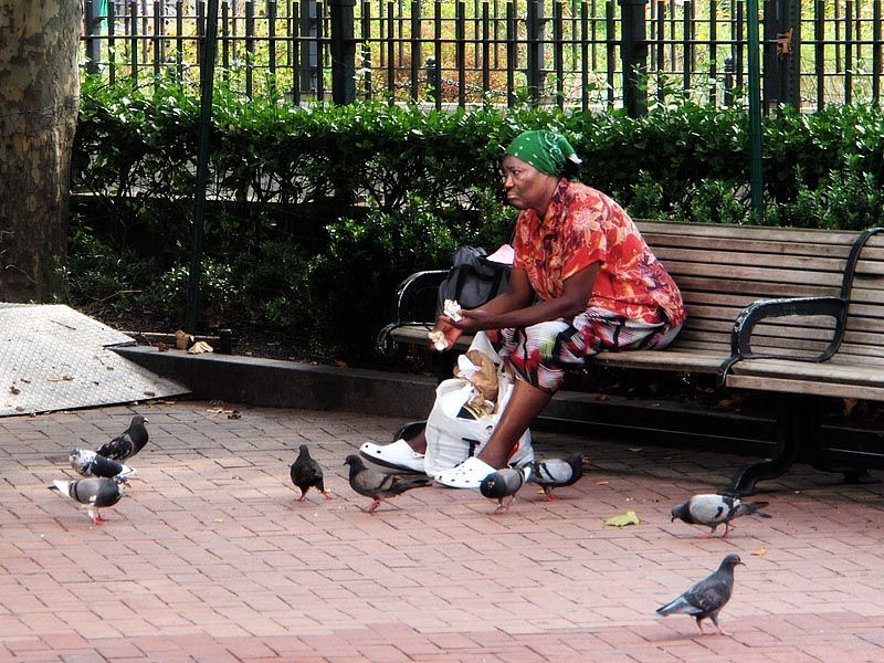 Feeding the birds at City Hall plaza