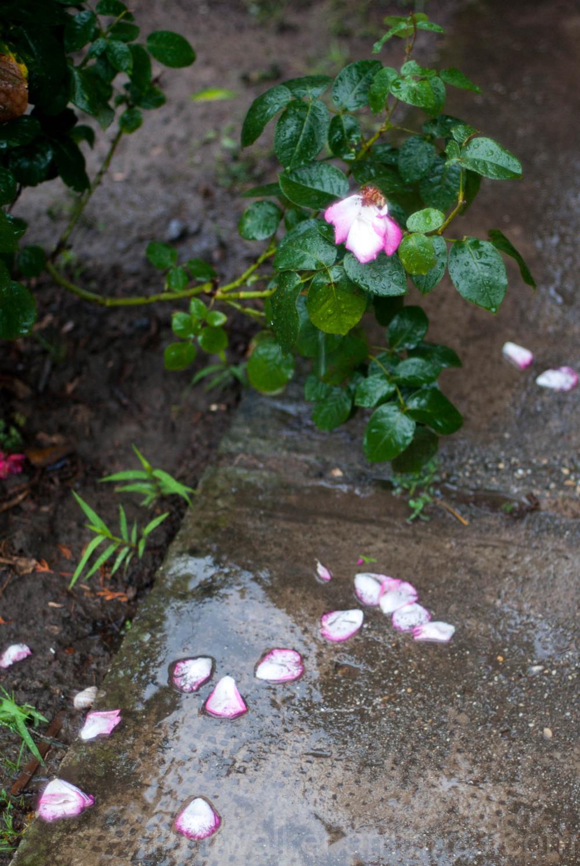 Collaterals of heavy rain