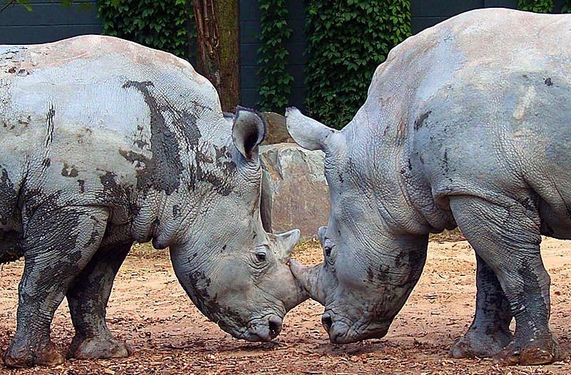 tête à tête au zoo de granby