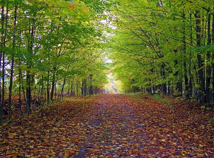 l'entrée - the pathway