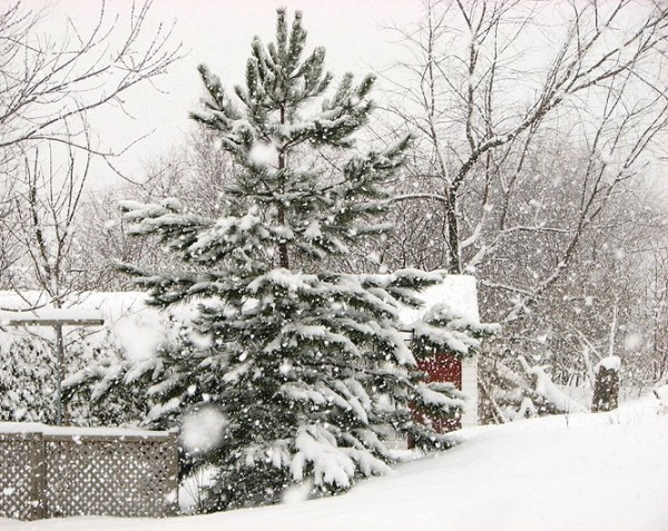 blancheur hivernale - winter whiteness