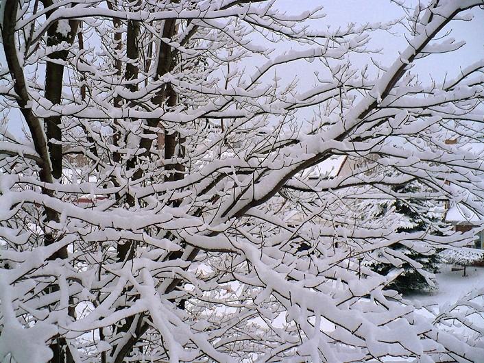 la belle neige - beautiful snow