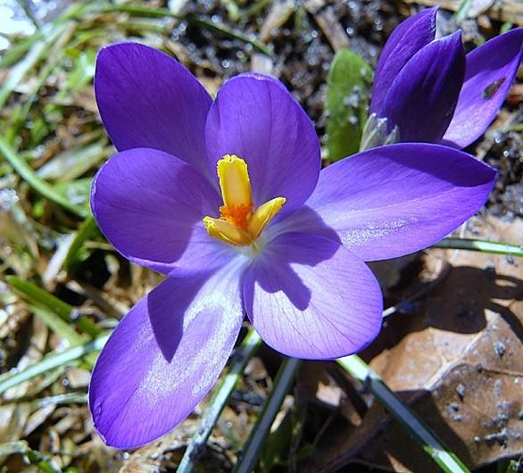 enfin le printemps ! - finally, spring!