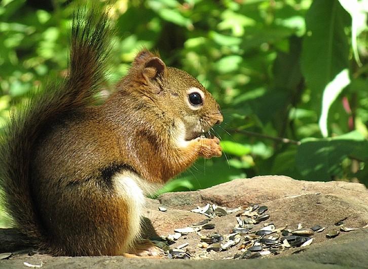 écureuil du centre d'interprétation de la nature 2