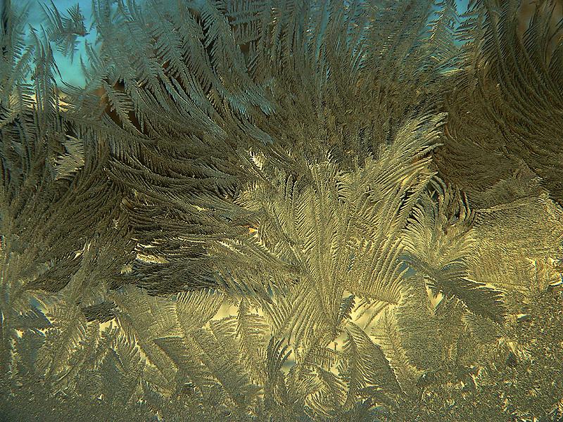arabesque givrée - frosted arabesque
