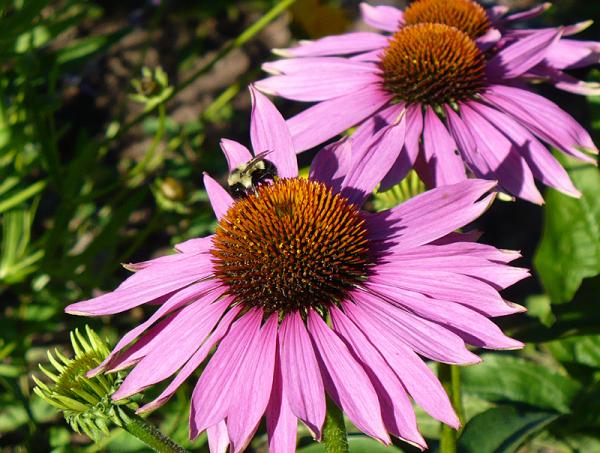 de la vie dans mon jardin - life in my garden