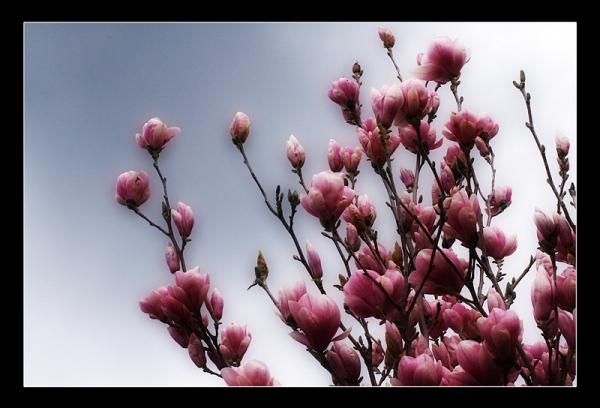 défi printemps [ 5 ] - spring challenge [ 5 ]
