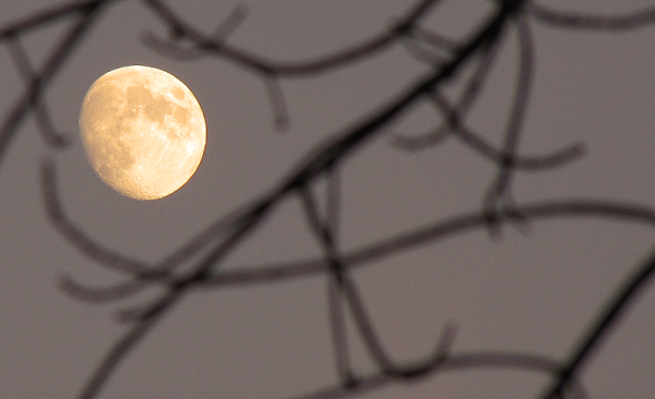 lune orange - orange moon