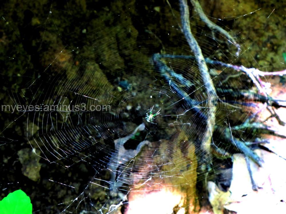 spider net