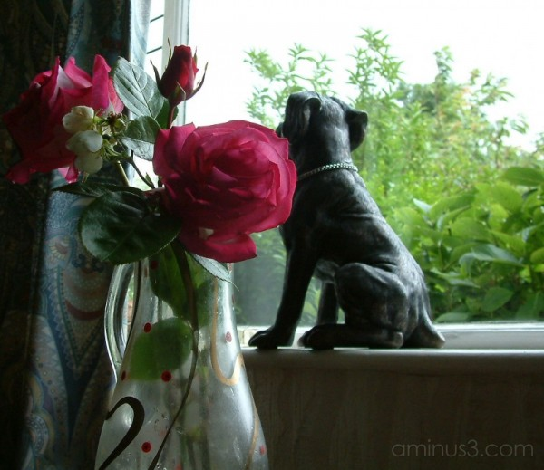 Rose and Dog