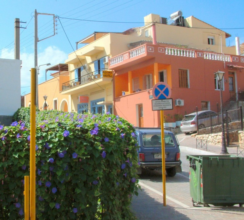 A flowering hedge in Chania
