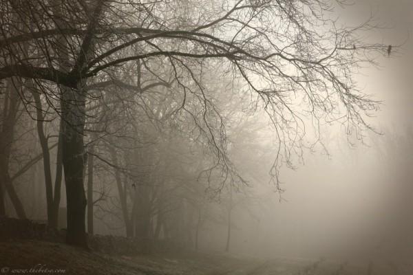foggy fairview road tree farm