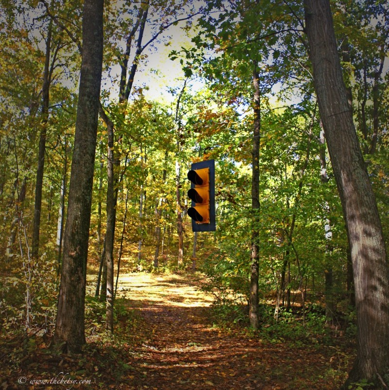 merry oak farm forest stoplight