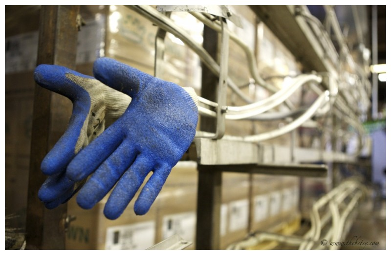 yuengling brewery blue gloves quittin time
