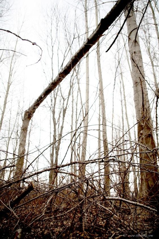 widowmaker fallen tree welkenweir high key