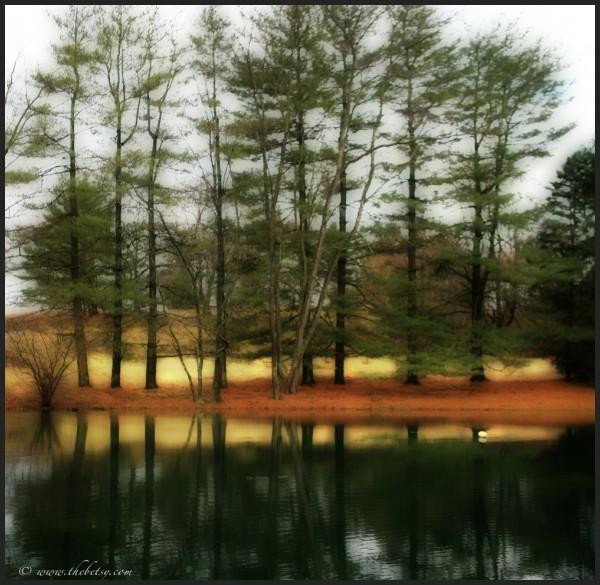 lake trees reflection spring water golden