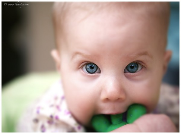 cassie baby portrait blue eyes gaussian blur