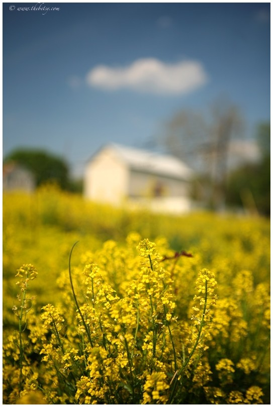 honeybook yellow spring barn one white cloud blue