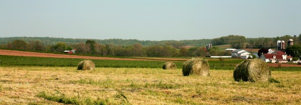 honeybrook hay bales farm panoramic red barns