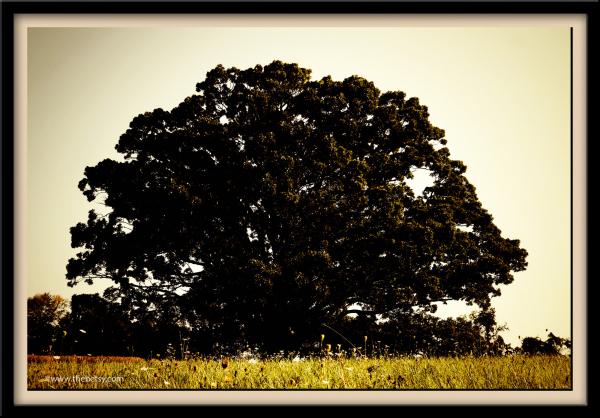 frame. tree. birchrunville, retro